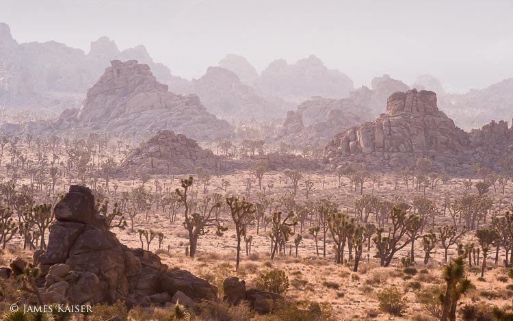 Amazing Joshua Tree National Park Pictures & Backgrounds