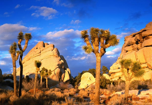 Nice wallpapers Joshua Tree National Park 600x415px