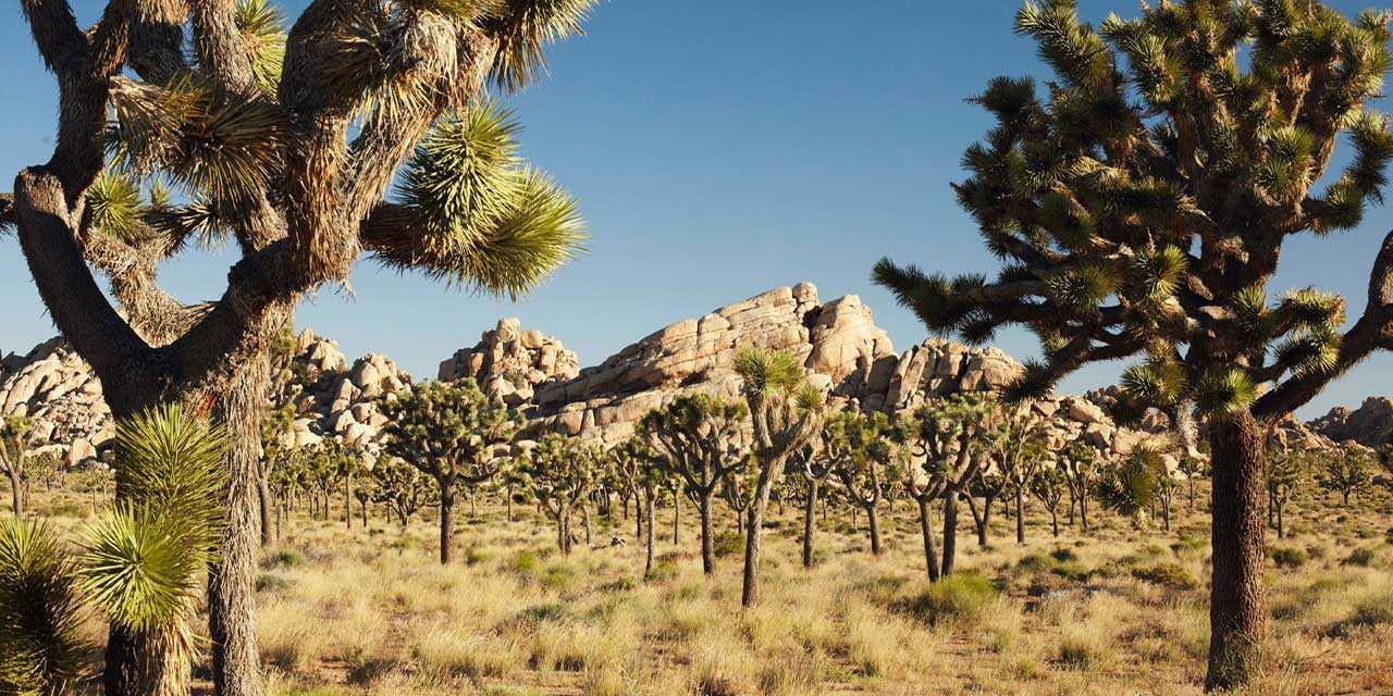 Images of Joshua Tree National Park | 1280x640