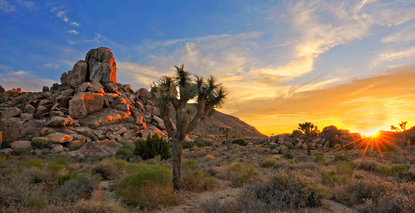 Nice wallpapers Joshua Tree National Park 1400x720px