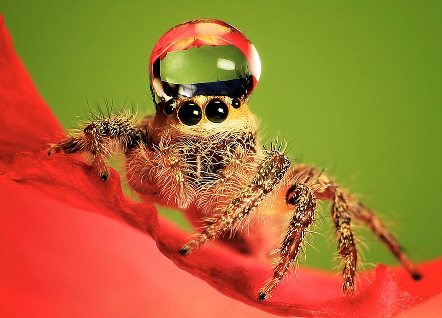 HD Quality Wallpaper | Collection: Animal, 880x634 Jumping Spider