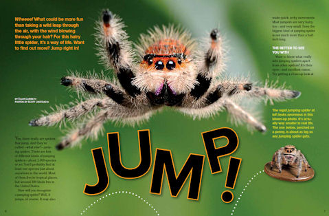 High Resolution Wallpaper | Jumping Spider 479x314 px
