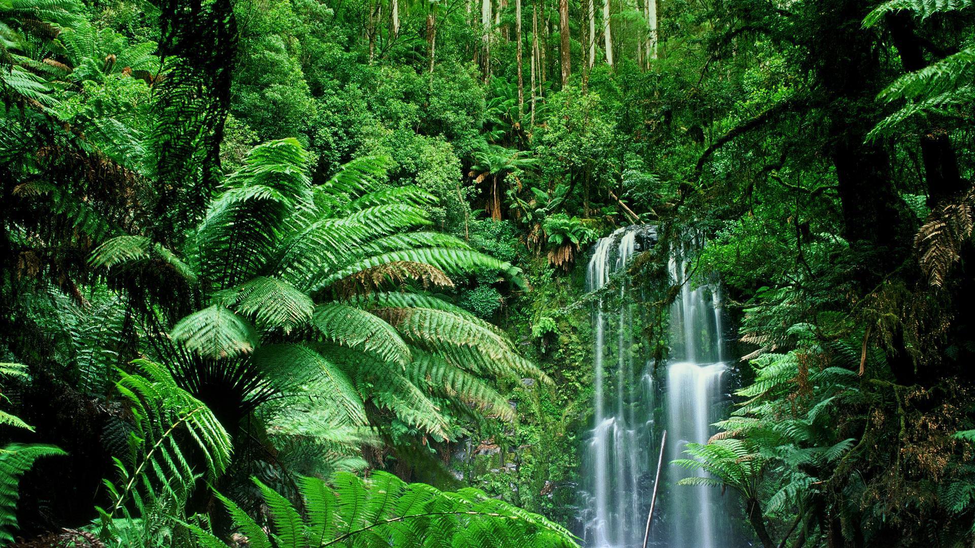 Jungle #4