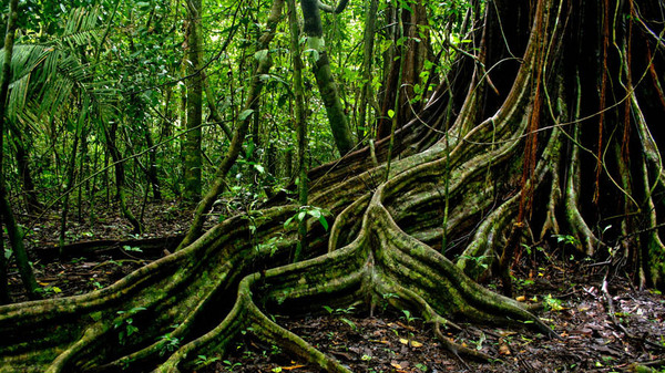 Jungle Pics, Earth Collection