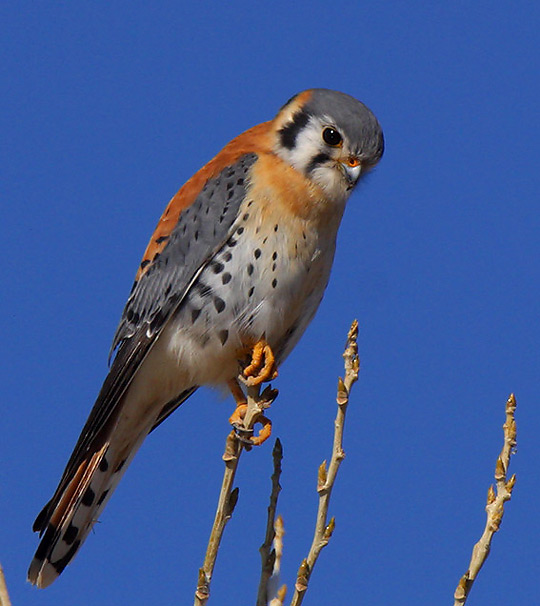 Kestrel Pics, Animal Collection