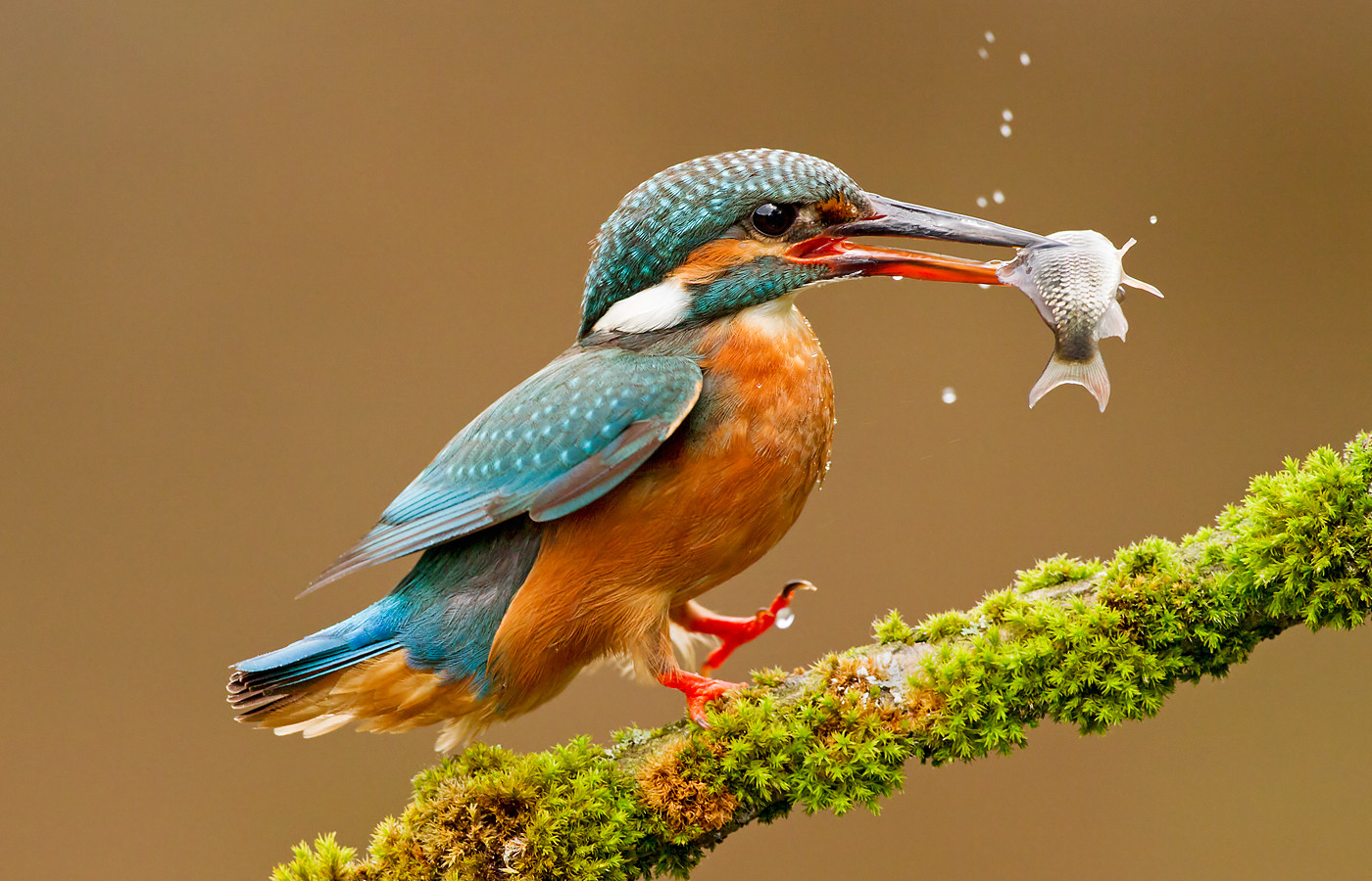 Images of Kingfisher | 1400x900