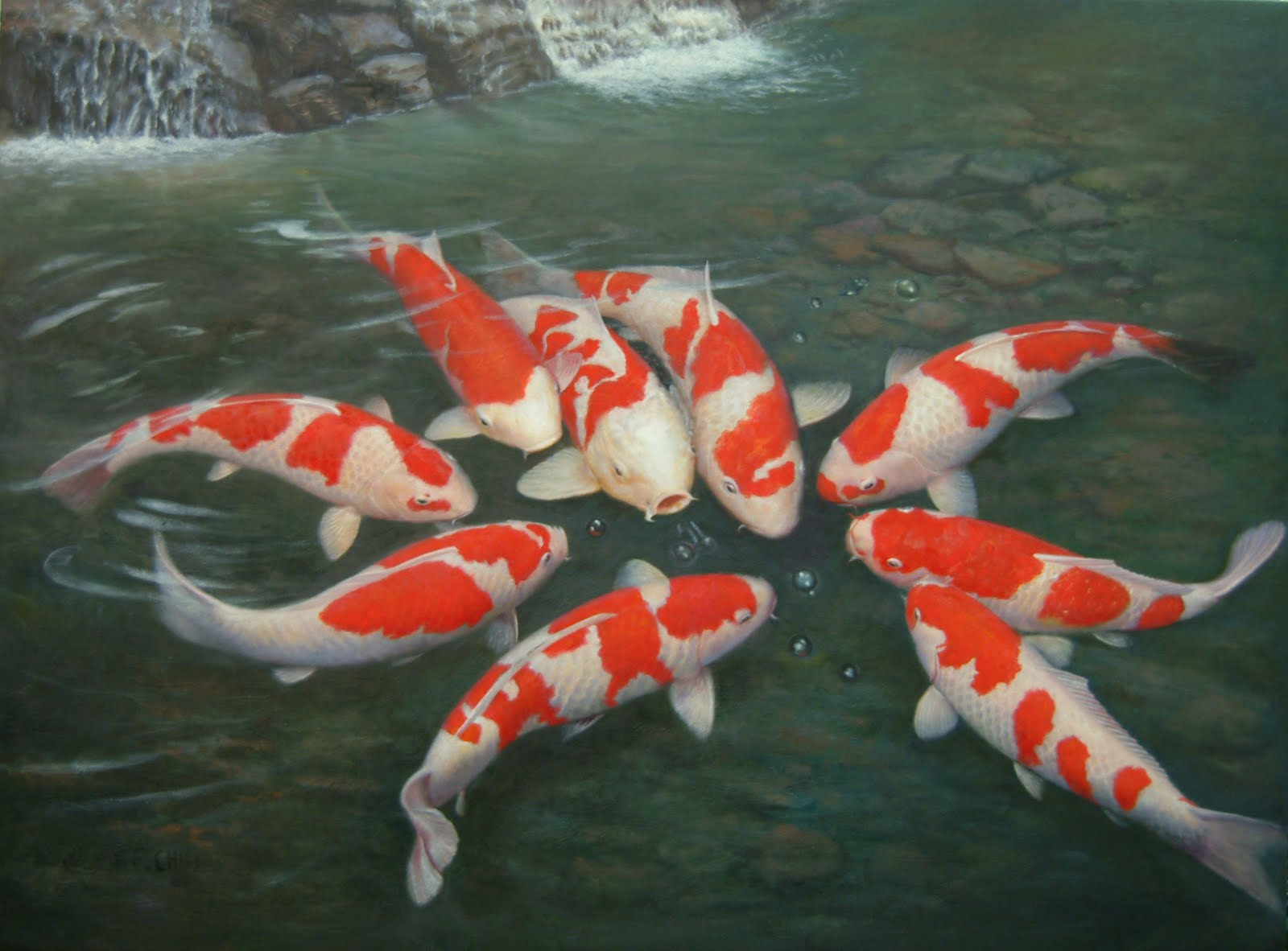 Amazing Koi Pictures & Backgrounds