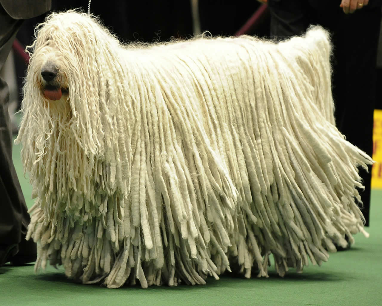 HD Quality Wallpaper | Collection: Animal, 1280x1024 Komondor