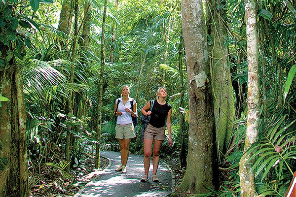 Kuranda Rianforest #19