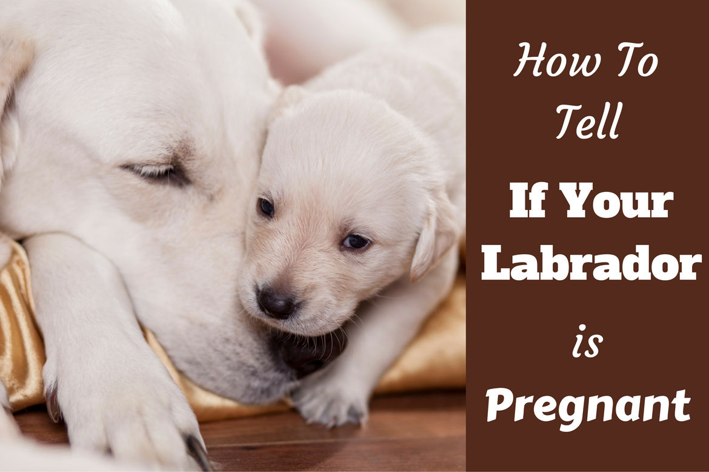 Images of Labrador | 1170x780