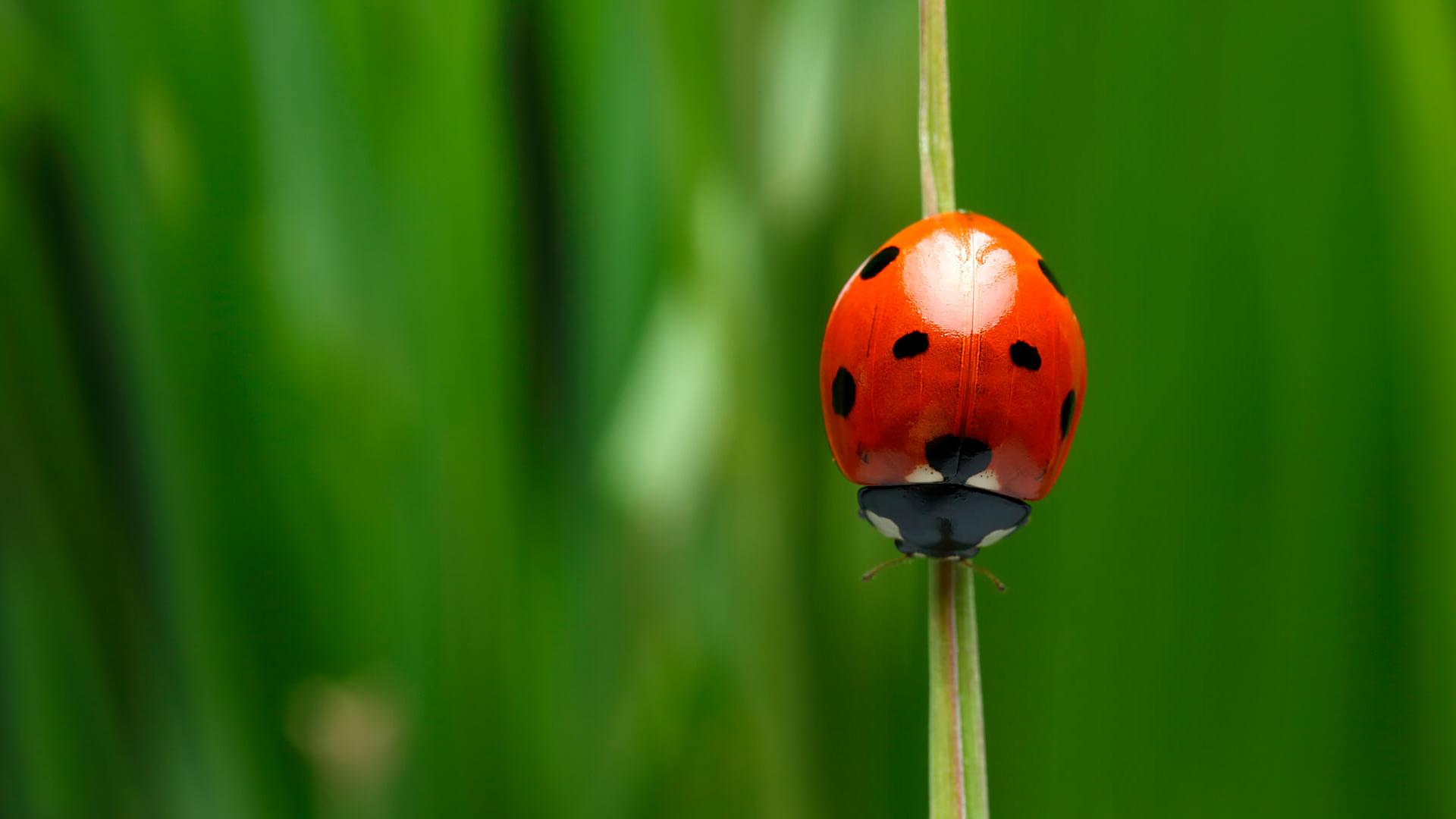 Images of Ladybug | 1920x1080