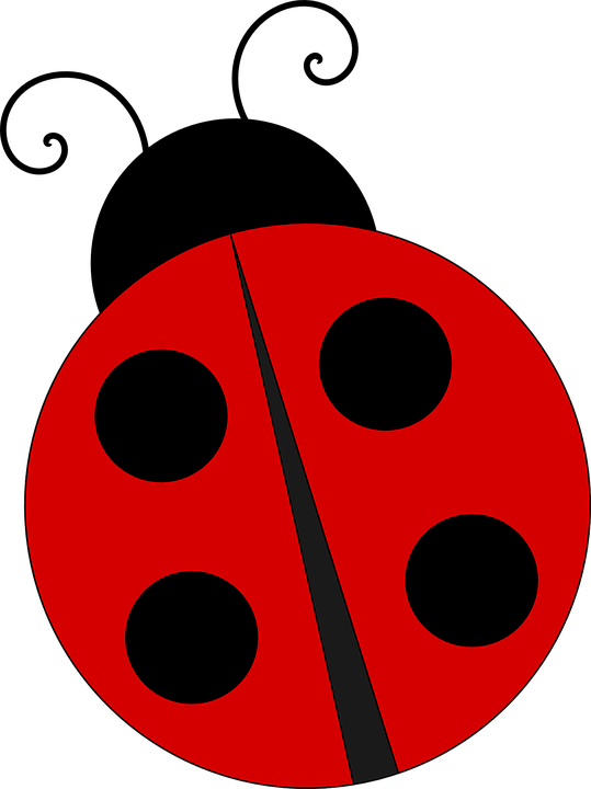Ladybug Backgrounds, Compatible - PC, Mobile, Gadgets| 539x720 px