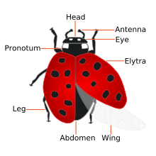 Ladybug High Quality Background on Wallpapers Vista
