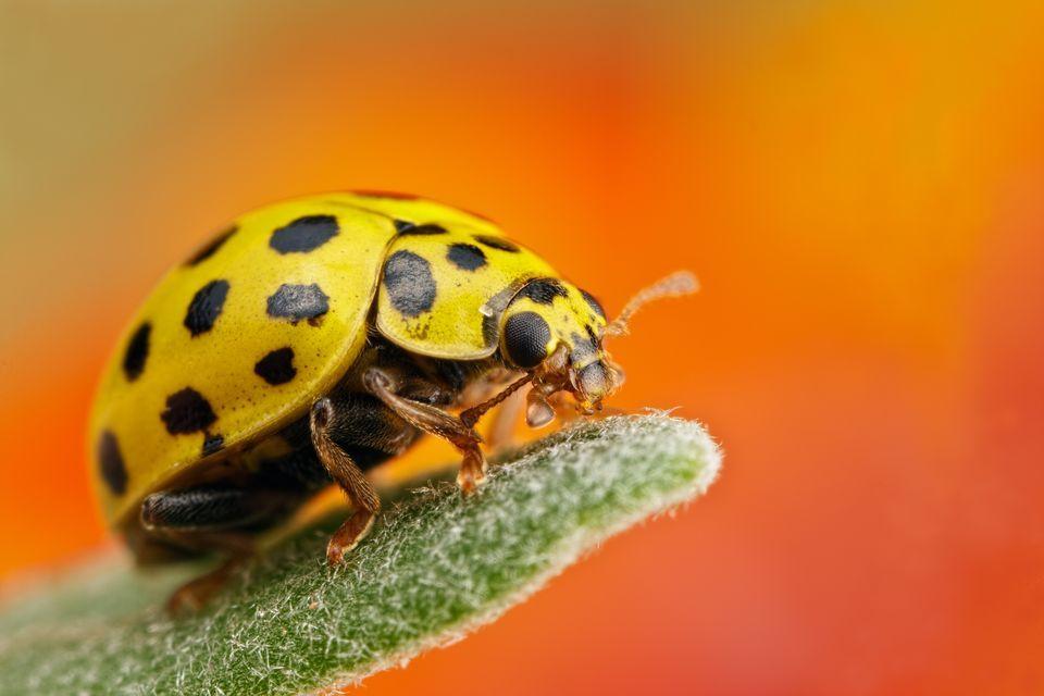 Ladybug Backgrounds on Wallpapers Vista