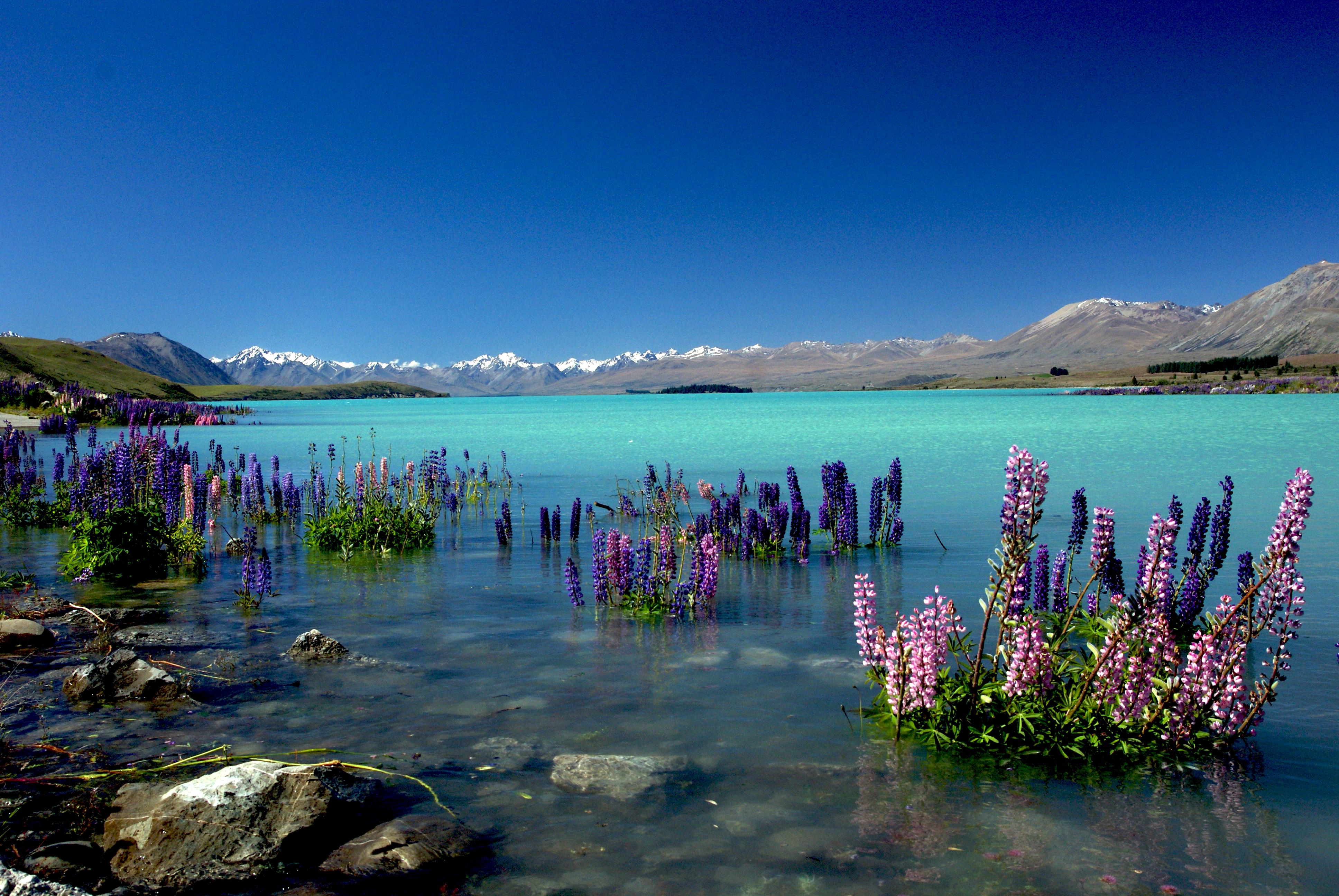 Lake Tekapo Pics, Earth Collection
