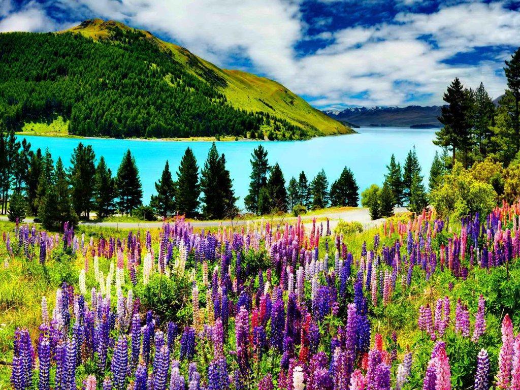 HD Quality Wallpaper | Collection: Earth, 1024x768 Lake Tekapo