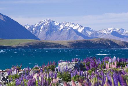 Amazing Lake Tekapo Pictures & Backgrounds