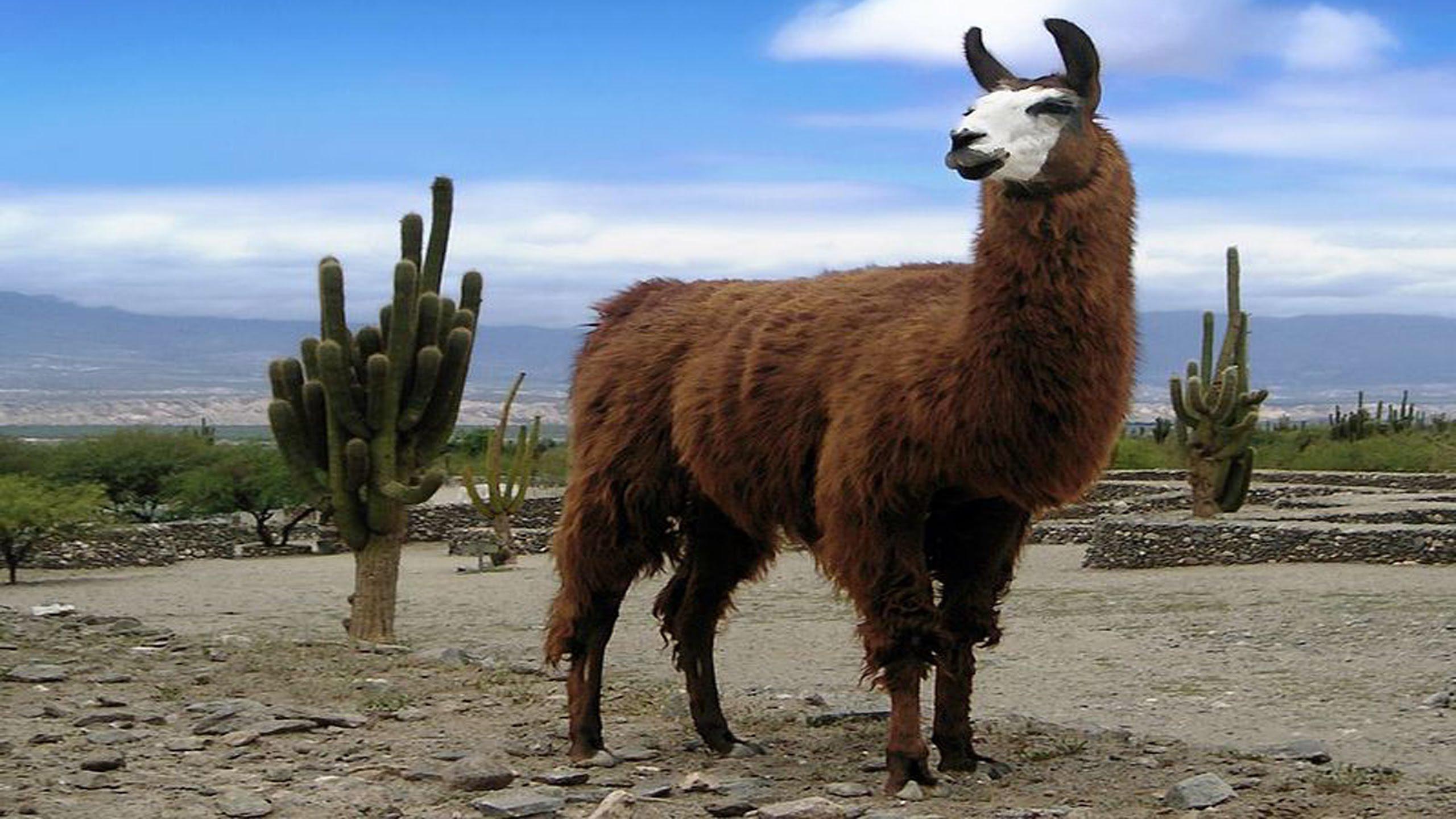 Lama Pics, Animal Collection