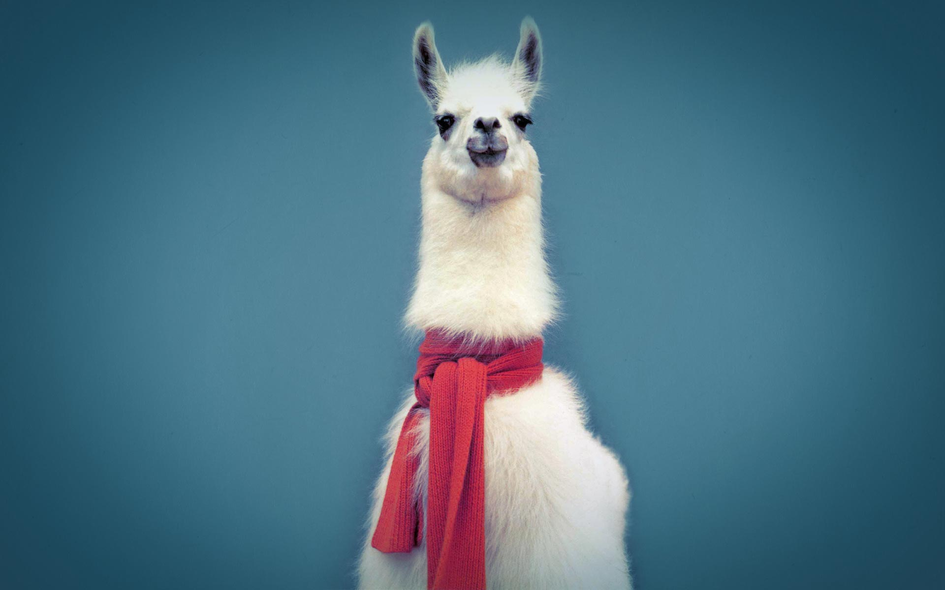 Amazing Lama Pictures & Backgrounds