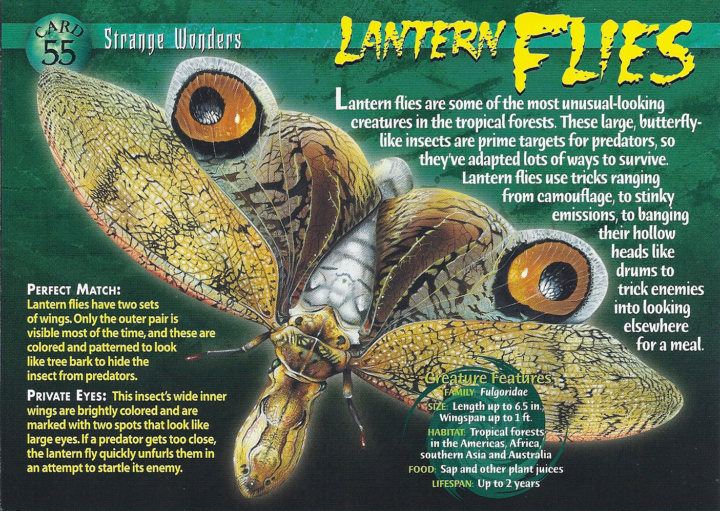 Lantern Fly Backgrounds on Wallpapers Vista