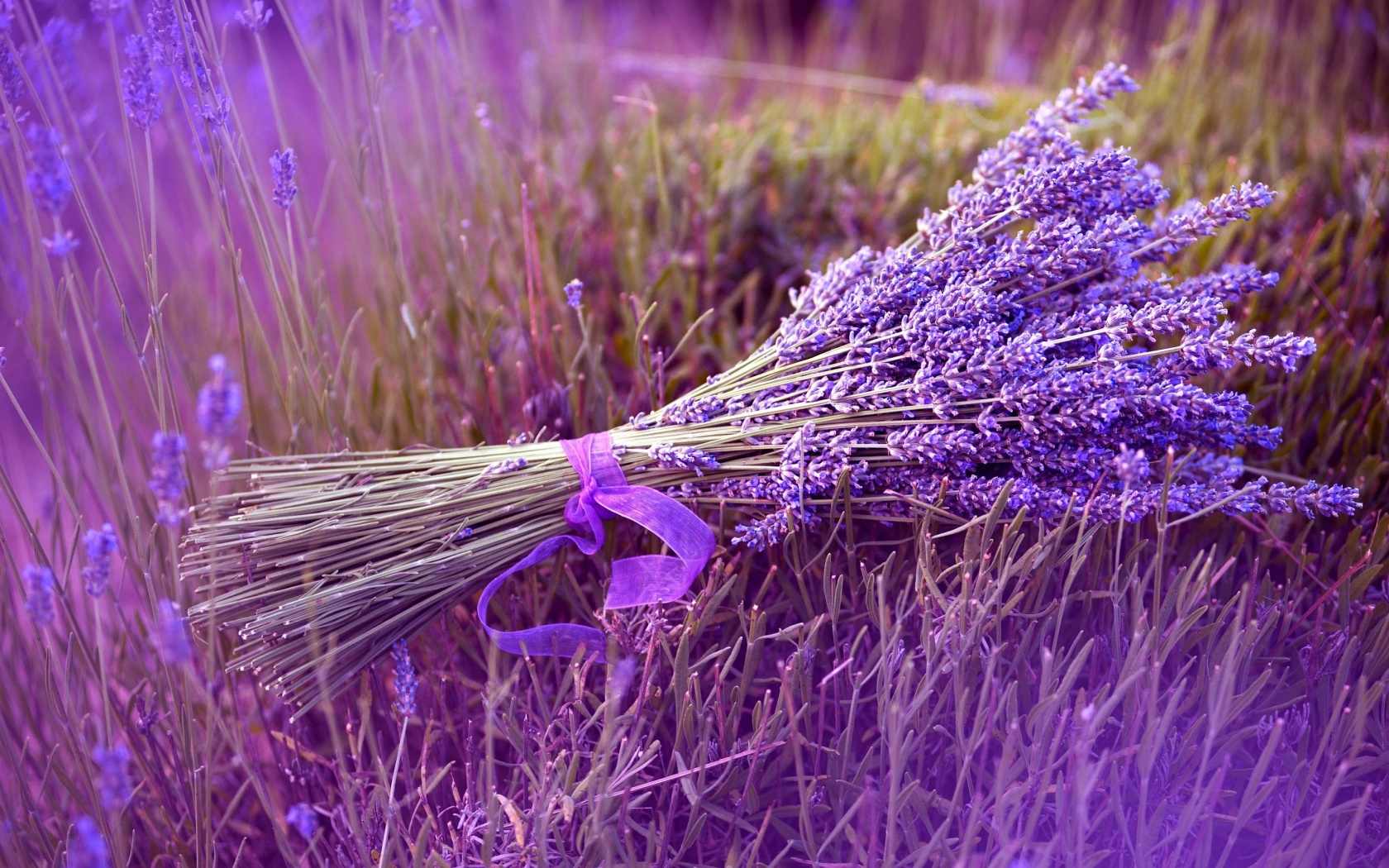 Nice wallpapers Lavender 1680x1050px