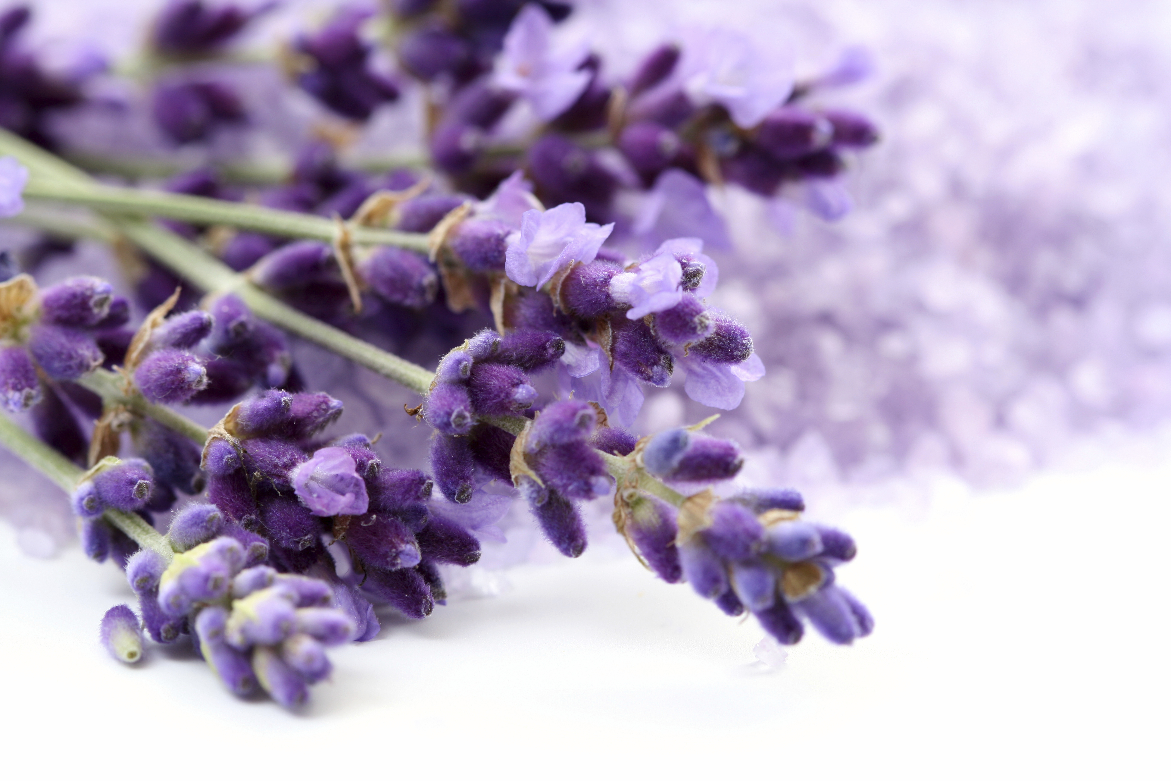 Lavender Pics, Earth Collection