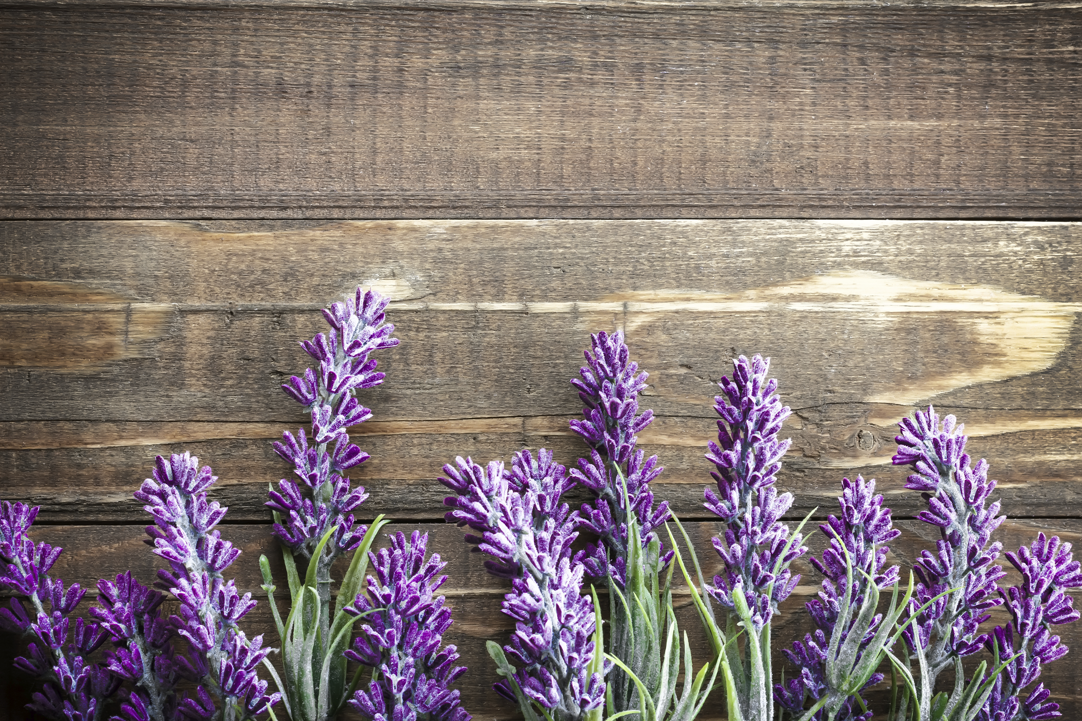 4368x2912 > Lavender Wallpapers