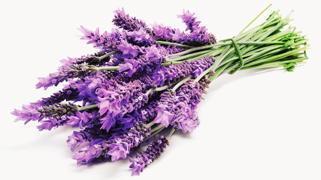 Nice wallpapers Lavender 642x361px