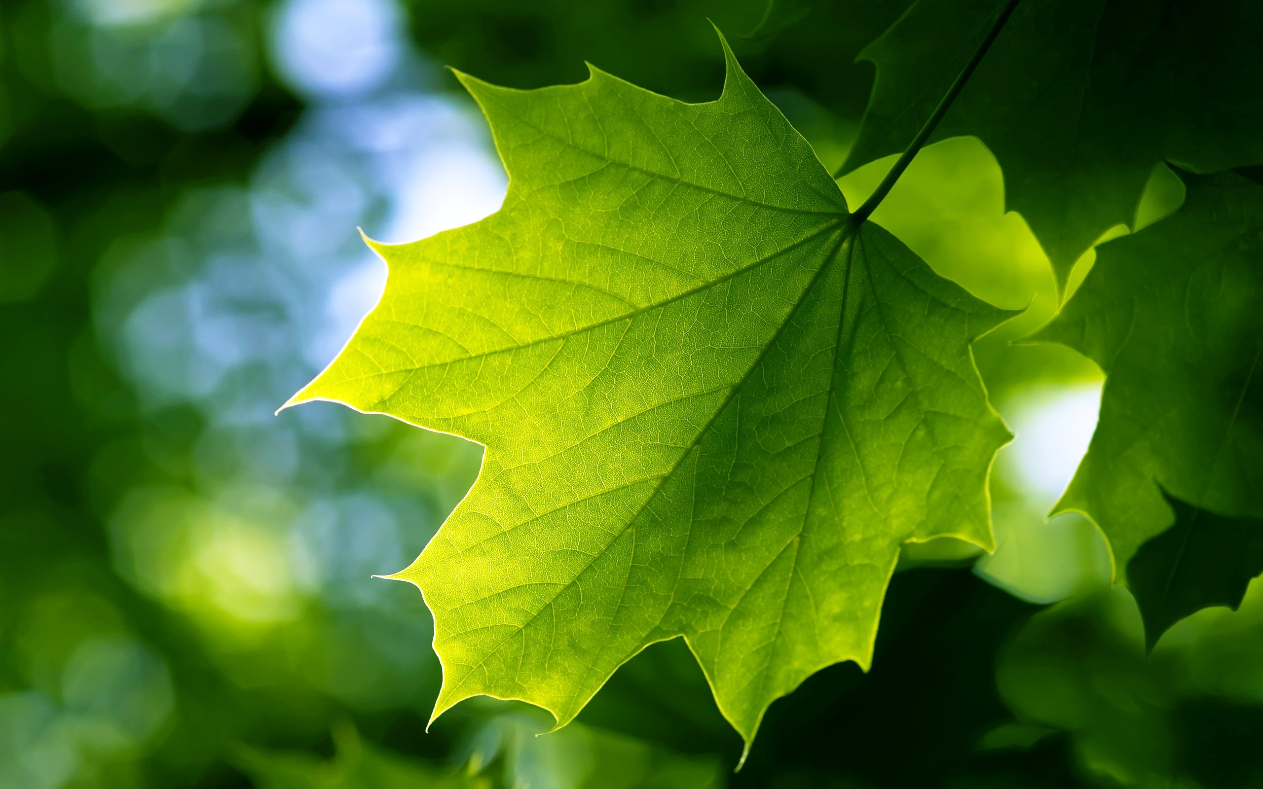 Nice wallpapers Leaf 2560x1600px