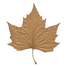 Leaf Backgrounds, Compatible - PC, Mobile, Gadgets| 220x220 px