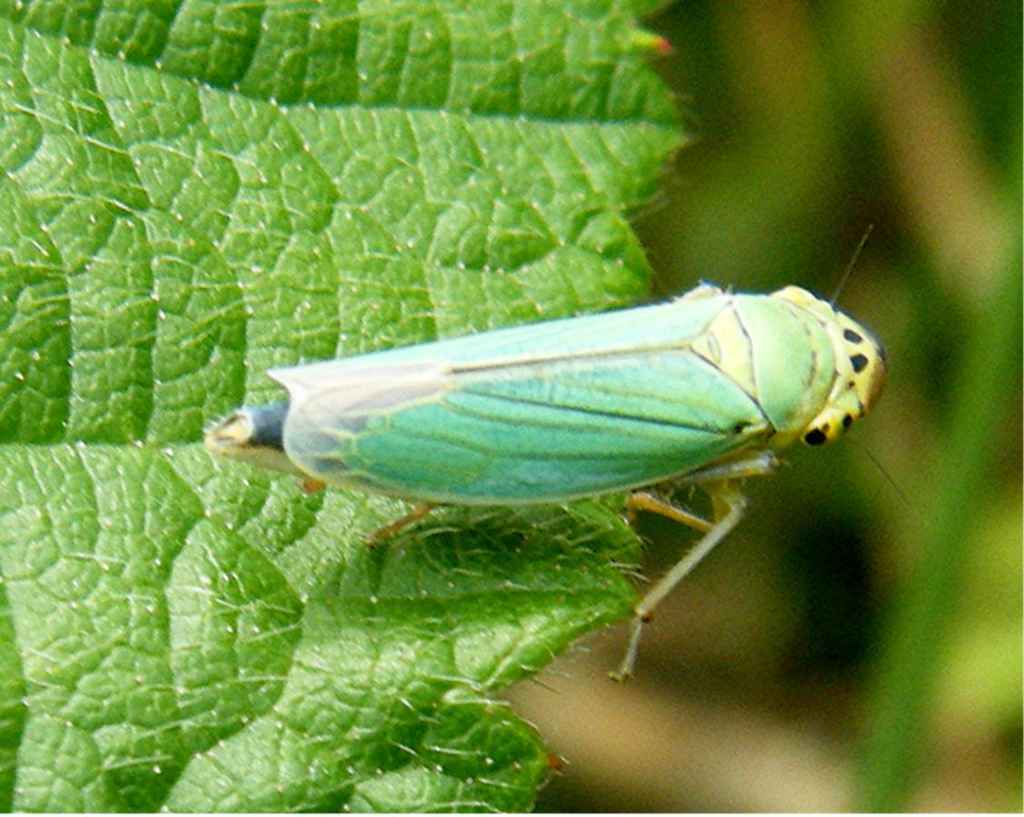 1128x900 > Leafhopper Wallpapers