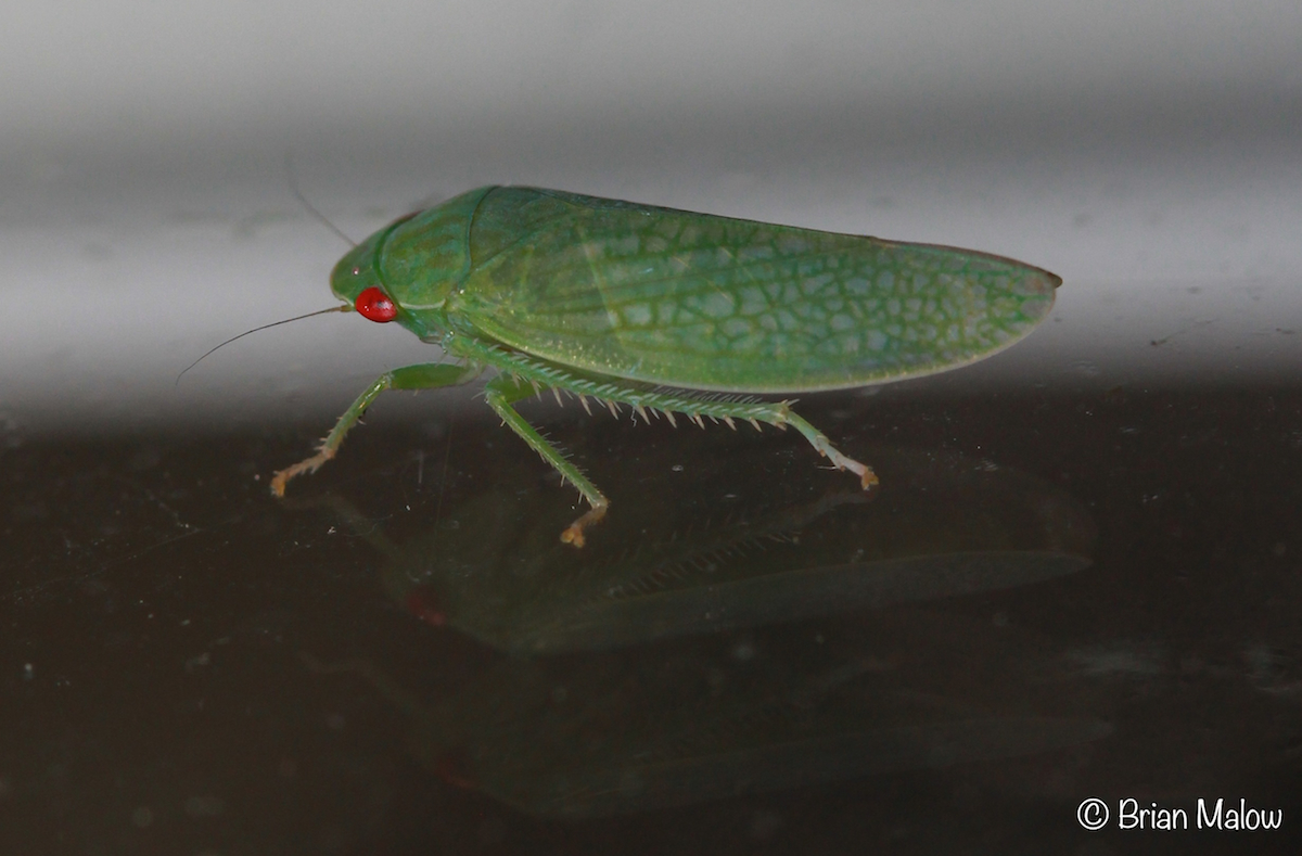 HD Quality Wallpaper   Collection: Animal, 1200x789 Leafhopper