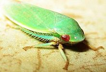 220x150 > Leafhopper Wallpapers