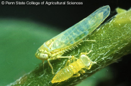 Amazing Leafhopper Pictures & Backgrounds