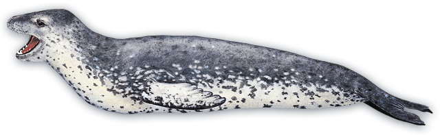 Leopard Seal Pics, Animal Collection