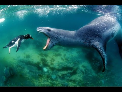 Leopard Seal Backgrounds on Wallpapers Vista