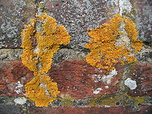 Images of Lichen | 220x165
