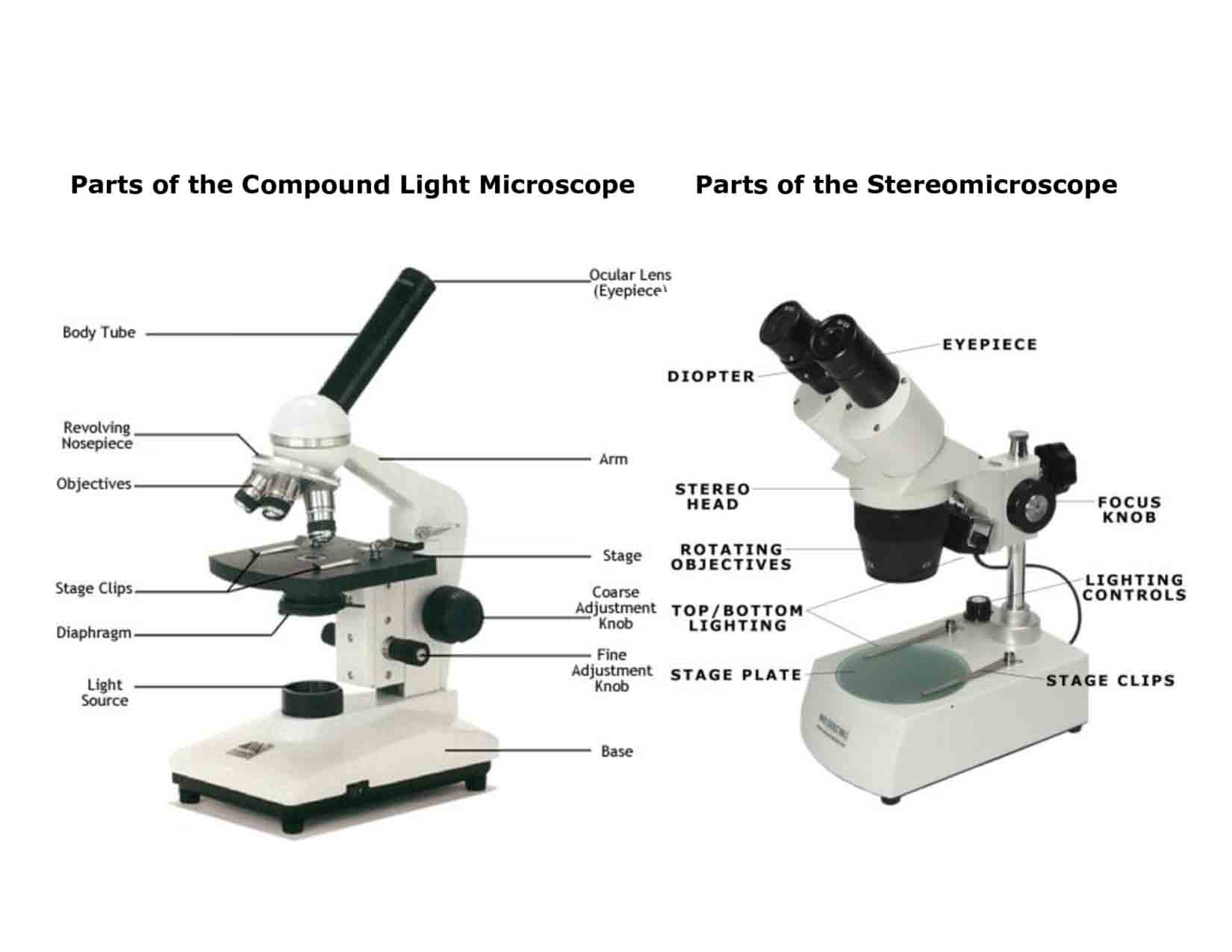 Light Microscopy High Quality Background on Wallpapers Vista