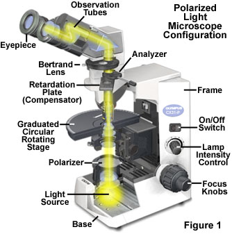 Images of Light Microscopy   334x337