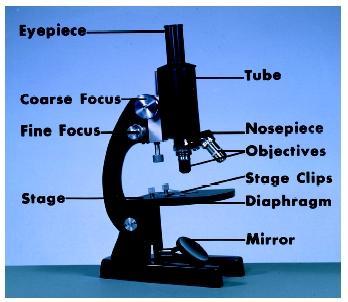 HQ Light Microscopy Wallpapers   File 17.75Kb