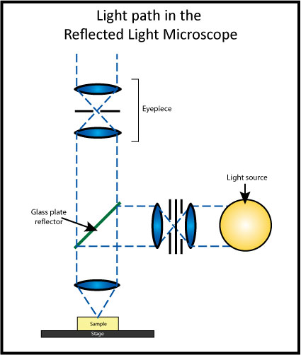 Light Microscopy Backgrounds, Compatible - PC, Mobile, Gadgets  425x502 px