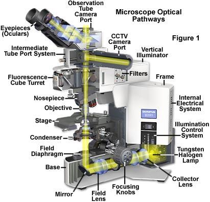 HQ Light Microscopy Wallpapers   File 36.56Kb