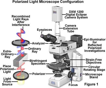 High Resolution Wallpaper   Light Microscopy 413x343 px