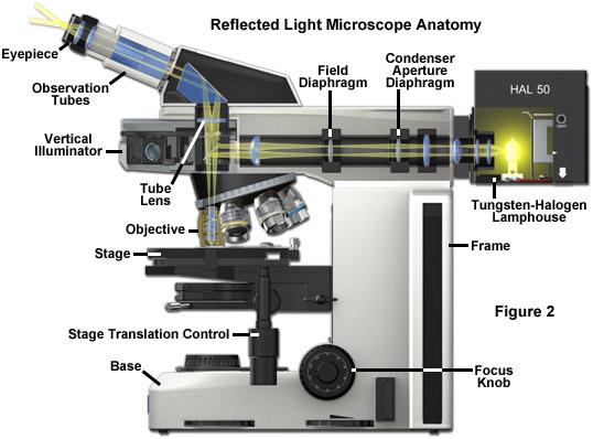 Light Microscopy Backgrounds on Wallpapers Vista