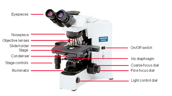 Light Microscopy Pics, Photography Collection