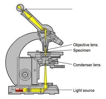 Light Microscopy Backgrounds, Compatible - PC, Mobile, Gadgets  359x336 px