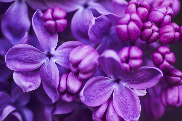 Lilac Backgrounds, Compatible - PC, Mobile, Gadgets| 700x467 px
