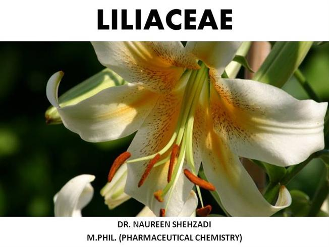 Nice wallpapers Liliaceae 652x489px