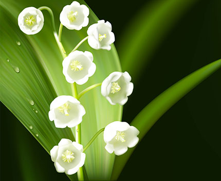 Lily Of The Valley #14