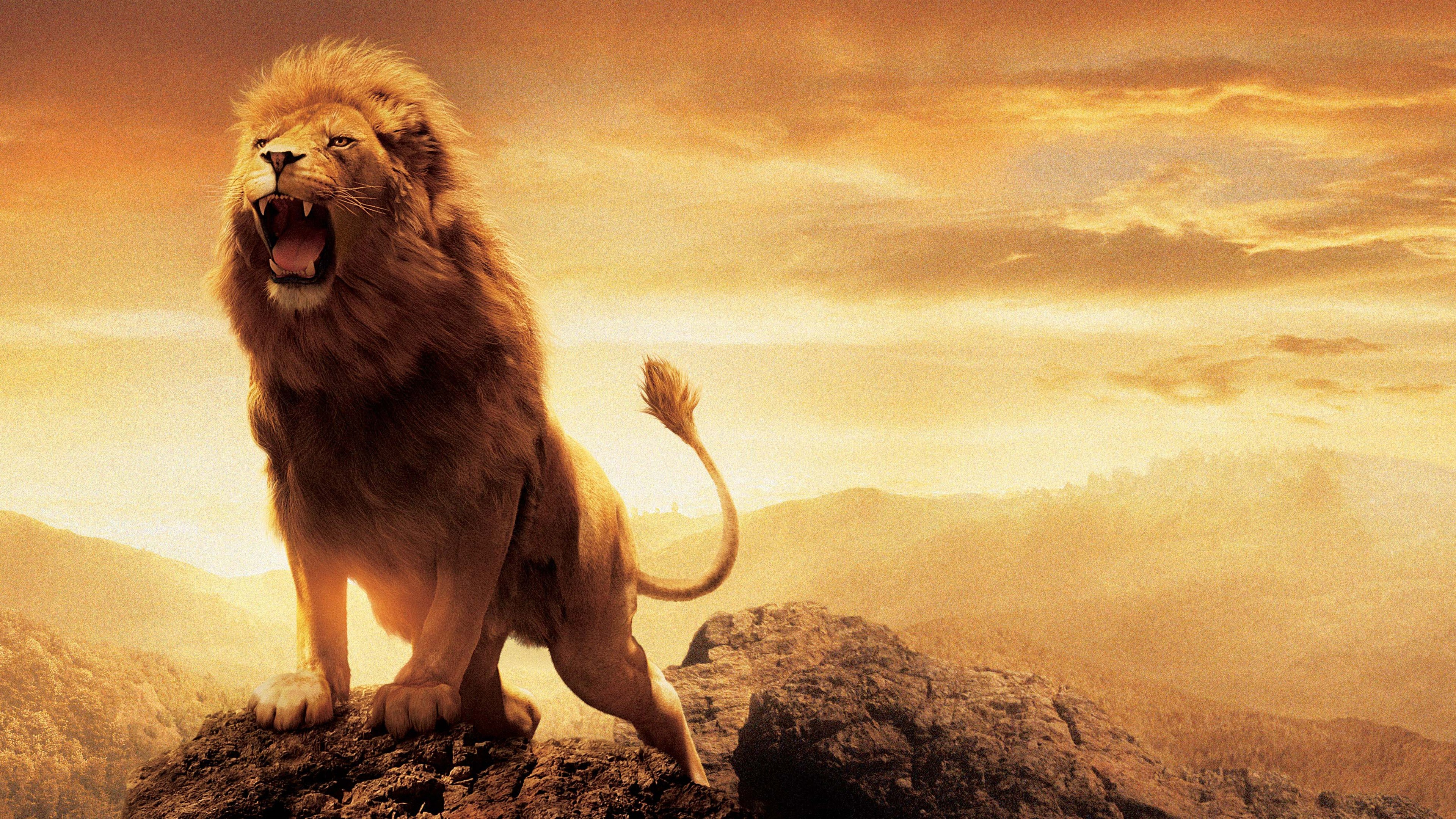 3840x2160 > Lion HD wallpapers Wallpapers